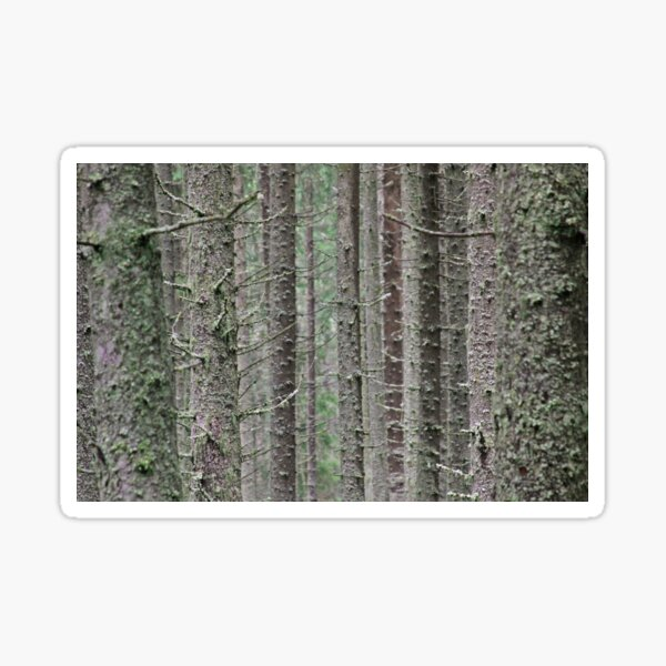 Pine tree trunks covered in moss Sticker