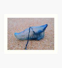 Bluebottle Art Print