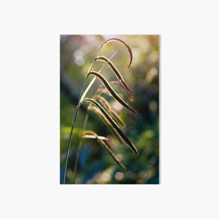 Pendulous Sedge Carex Pendula Art Board Print