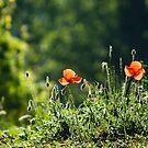 Green with red by Karen Havenaar