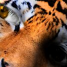 Little Tiger! by Kim Slater