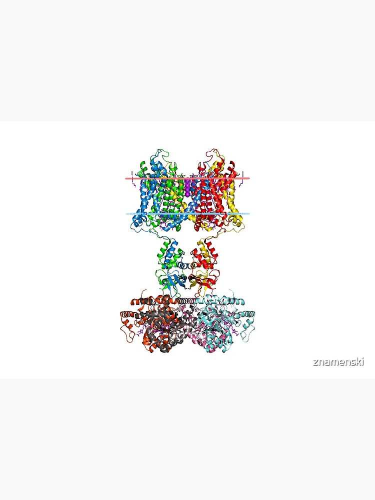 Molecular Structure of Ion Channels by znamenski