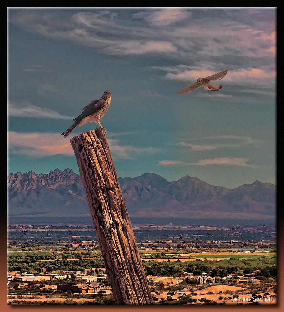 The Falcons by Richard  Gerhard