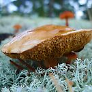 Fungi of Finland by KanaShow