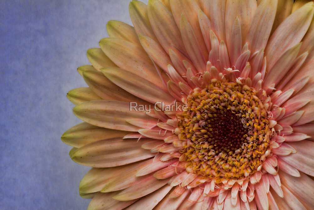 Fading Beauty by Ray Clarke