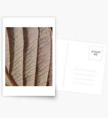 Straight lines  Postcards