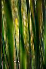 Bullrushes by lamiel