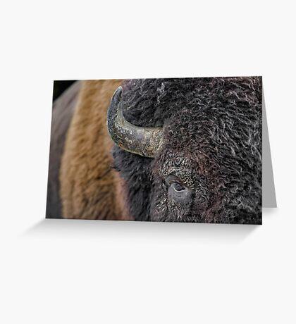 Bison up close Greeting Card