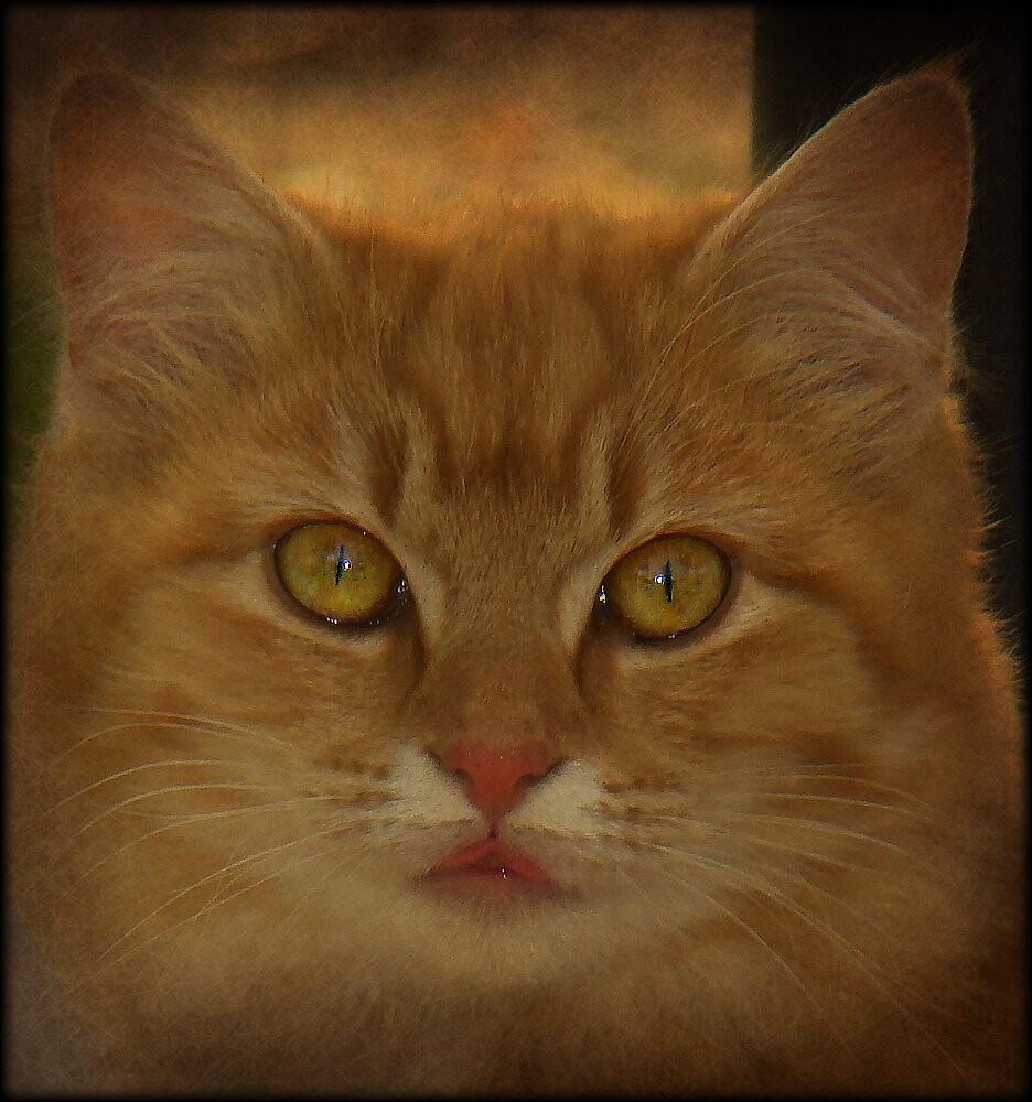 AUTUMN KITTY by PatChristensen