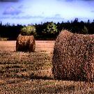 Make Hay by Riggzy