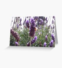Lavendar Greeting Card