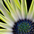 Macro of a yellowish flower by marina63