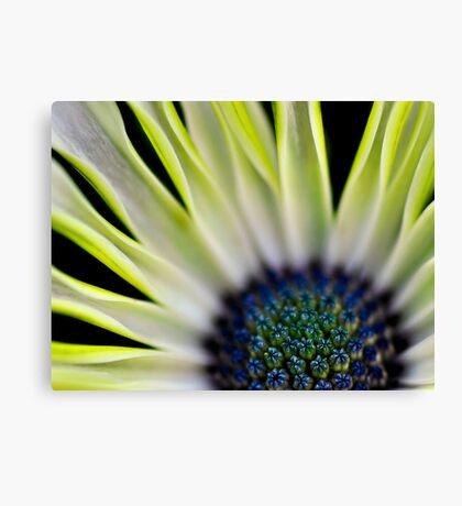 Macro of a yellowish flower Canvas Print