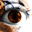 Tigers Eye by Kim Slater