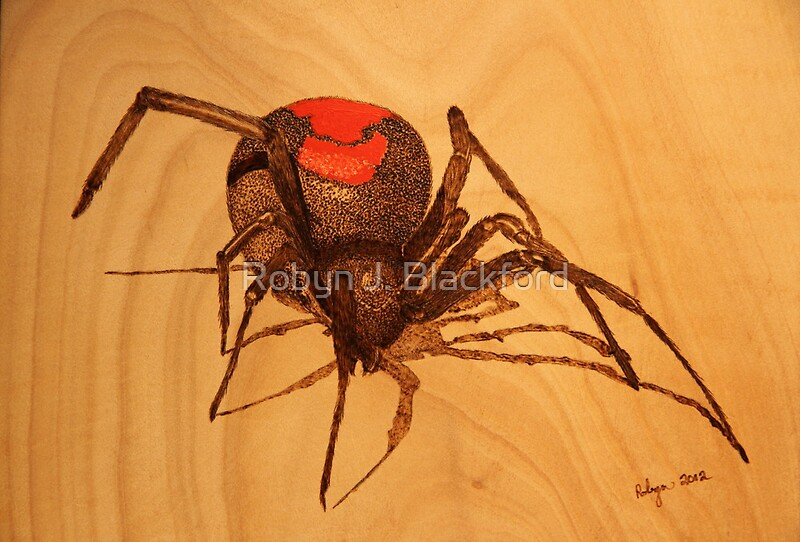 Quot Pyrography Australian Redback Spider Quot Posters By