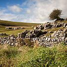 Out on the Dales by Ellesscee