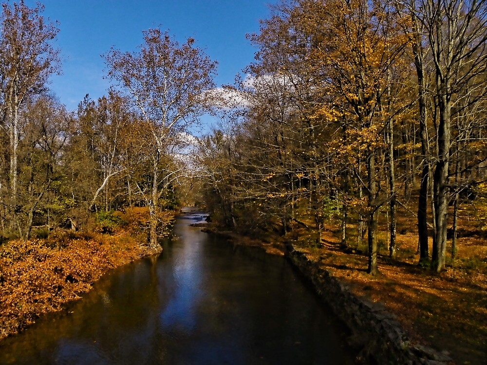 Tints of Autumn by Pamela Phelps