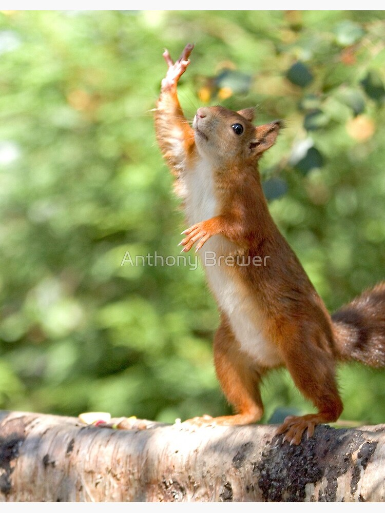 High four! by dailyanimals