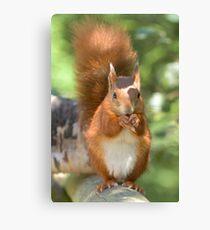 Pretty squirrel is pretty Canvas Print
