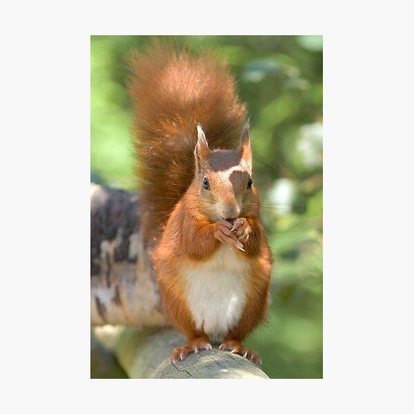 Pretty squirrel is pretty Photographic Print