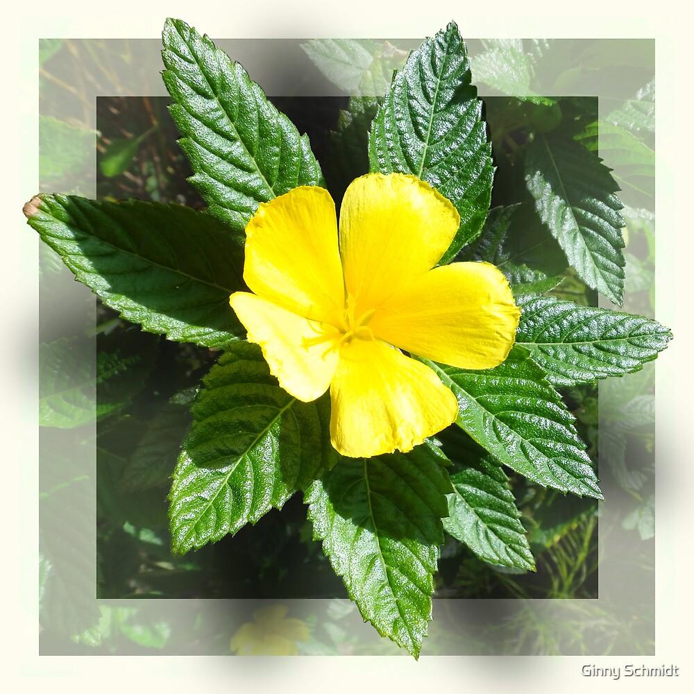 Loving Yellow by Ginny Schmidt