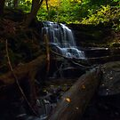 Little Ricky's Falls # 2 by Debra Fedchin