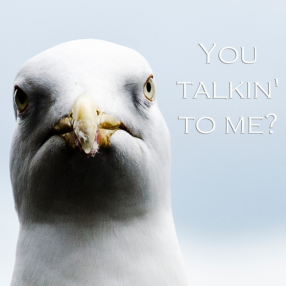 Angry Gull by Andrew Robinson