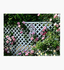 Rosalee Cottage Garden Photographic Print