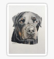 Max the beautiful Rottweiler Sticker
