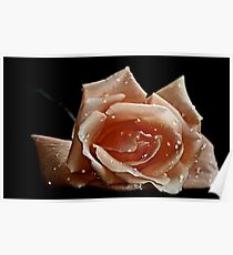""""""" First Rose of the Season..."""" Poster"""