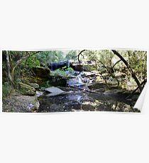 Aussie Bush, Brisbane Waters National Park. Poster