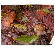Murky Autumn Leaves  Poster
