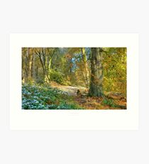 Lickey Hills, Worcestershire Art Print