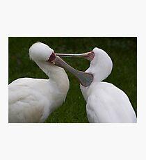 Grooming birds Photographic Print