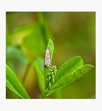Crimson-speckled Footman Moth Photographic Print