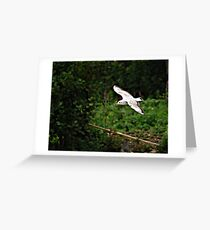 Adult Gull. Greeting Card