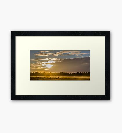 The Golden Touches Framed Print