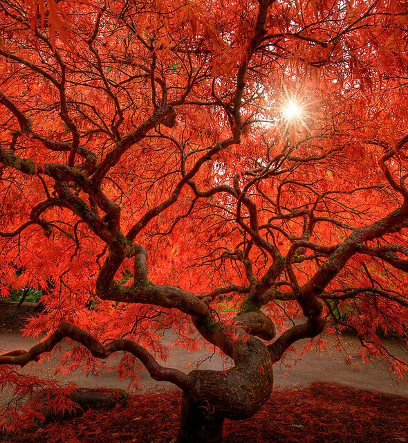 Red Lace by Dan Mihai