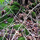 Tree trunk full of mushrooms by hanslittel