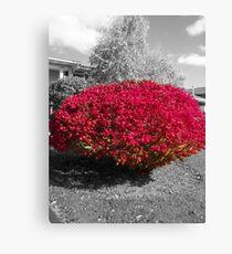 Colorized Burning Bush Canvas Print