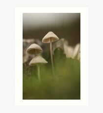 Selective focus on  mushrooms  Art Print