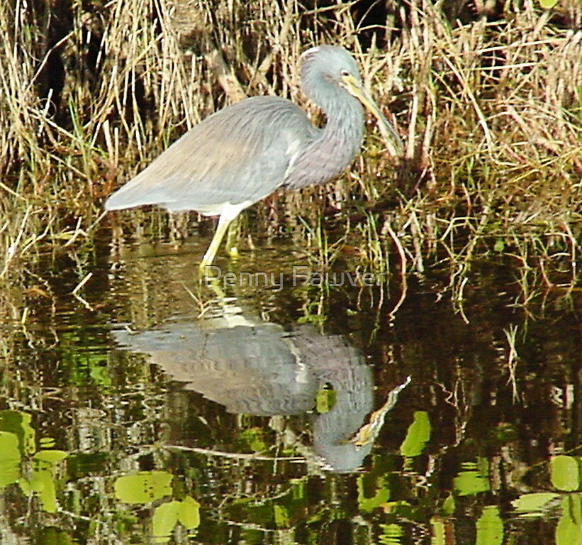 reflections by Penny Rinker