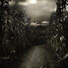 Dark Path by Karri Klawiter