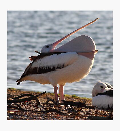 """A Mouth Full of Pelican"" Photographic Print"
