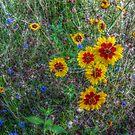 Sunshine Field of Flowers by Jane Neill-Hancock