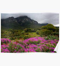 Spring in Kirstenbosch  Poster