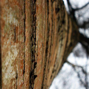 Red Tree  by jlisme