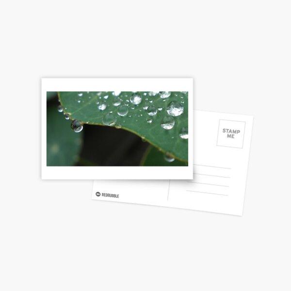 Rain Drops 2  Postcard