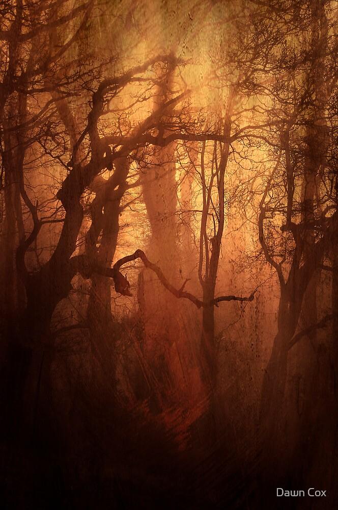 The Dark Woods by Dawn Cox