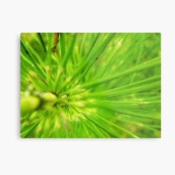 Abstact brilliant green plant 2 Metal Print